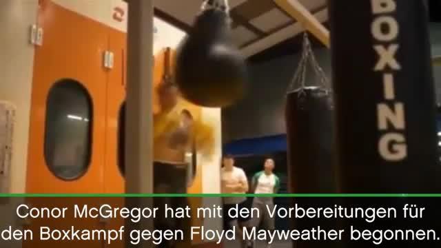 Boxen: McGregor schwitzt für Mayweather-Clash