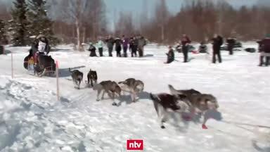 Das härteste Schlittenhunde-Rennen der Welt