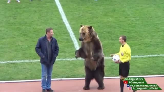 Russland: Irre Aktion! Braunbär auf Spielfeld