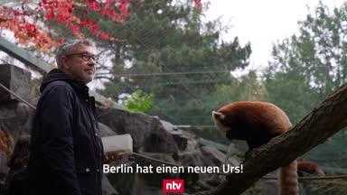 """Süß! Union-Trainer bändelt mit Panda """"Urs"""" an"""